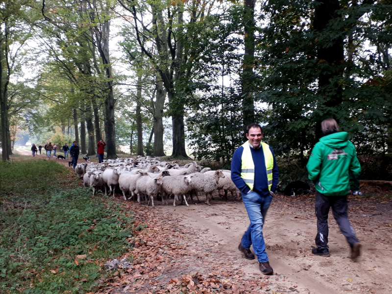 wandelen met de schapen